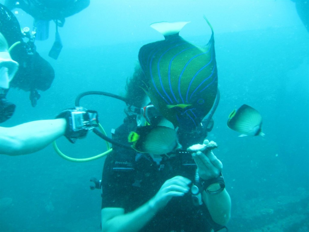 Dive (102) (Large).JPG