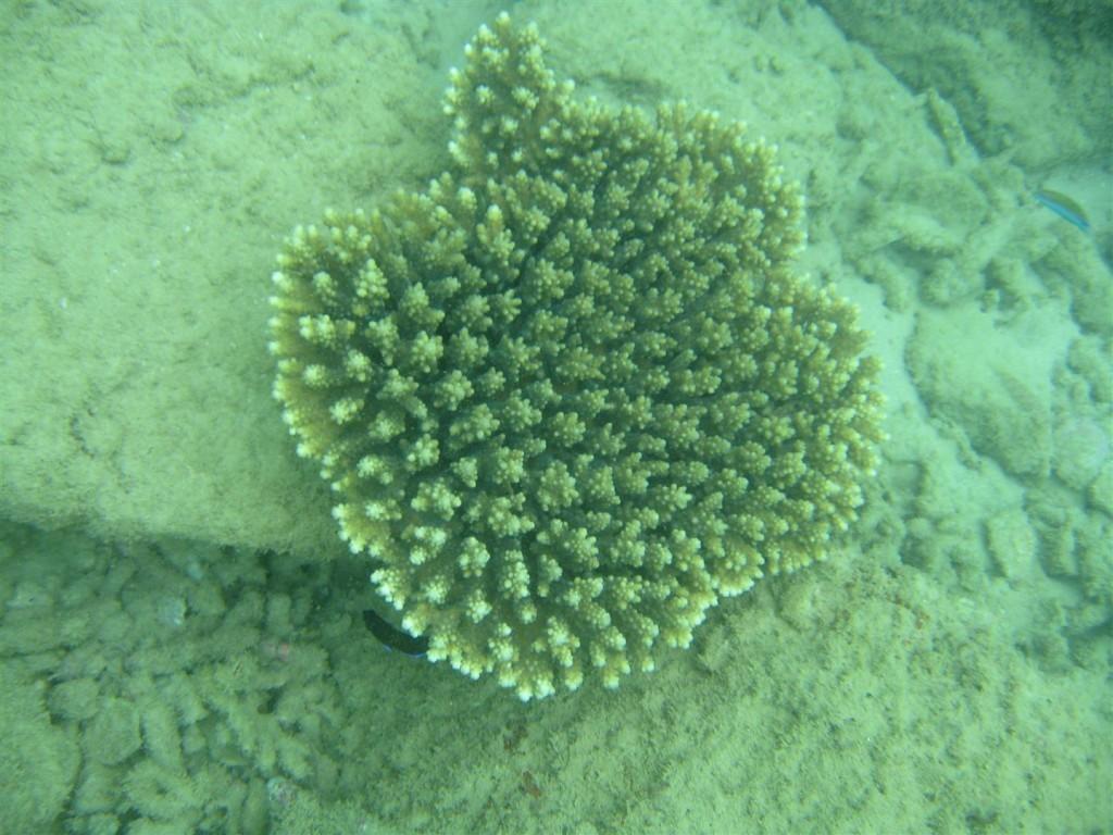 Dive (29) (Large).JPG