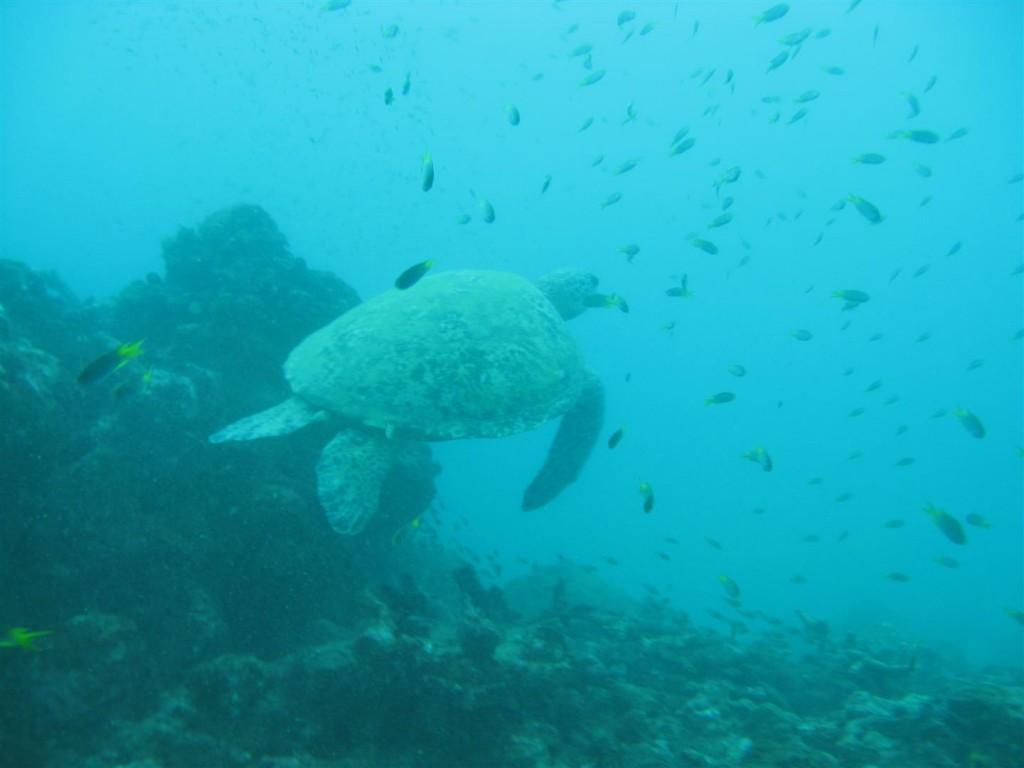 Dive (61) (Large).JPG