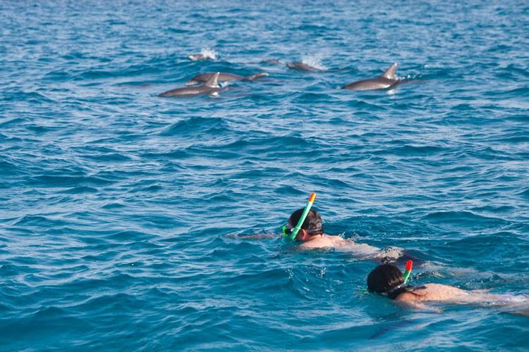 dolphin-big.jpg