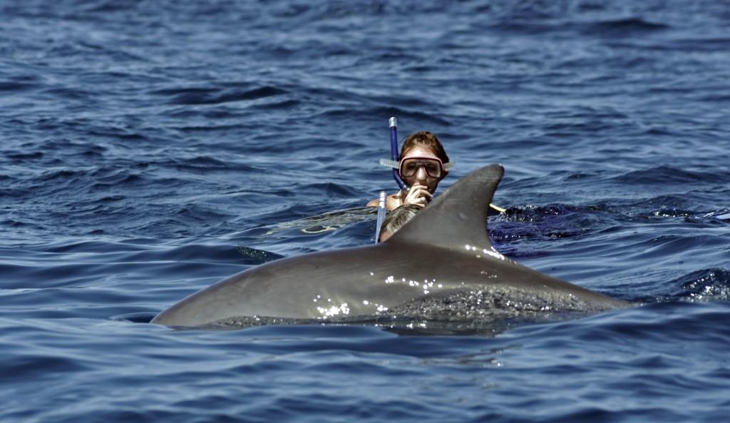 Dolphin_Tour.jpg
