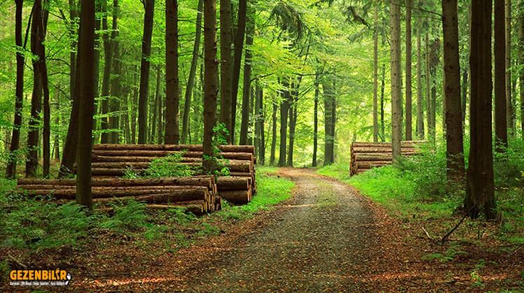 orman-yasaklari-ne-zaman-bitiyor.jpg